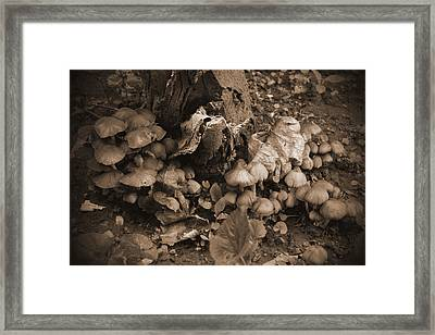 Alice's Wonderland Dream Framed Print