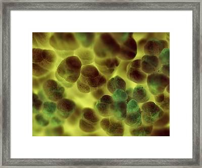 Alien Clutch Framed Print