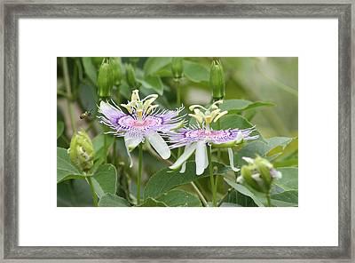 Alien Flower Framed Print