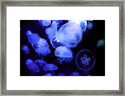 Alien Framed Print by Mitch Cat