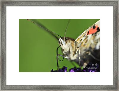 Alien Painted Lady Framed Print by Andy Smy