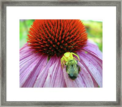 Framed Print featuring the photograph Alien Spider Having Lunch by Randy Rosenberger