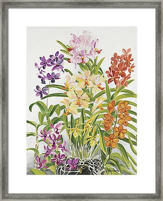 Alis Orchids Framed Print by Anji Worton