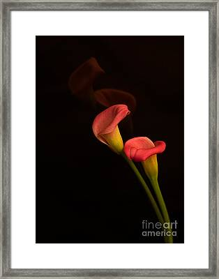 Alison's Flower Framed Print by Robert Pilkington