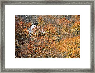 Alive Framed Print by Robert Shahbazi