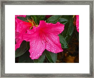 Alizarin In Rain 004 Framed Print by Michael J Genevro