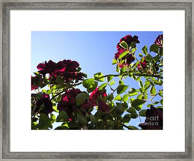All About Roses And Blue Skies I Framed Print by Daniel Henning