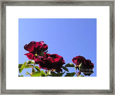 All About Roses And Blue Skies Xi Framed Print by Daniel Henning