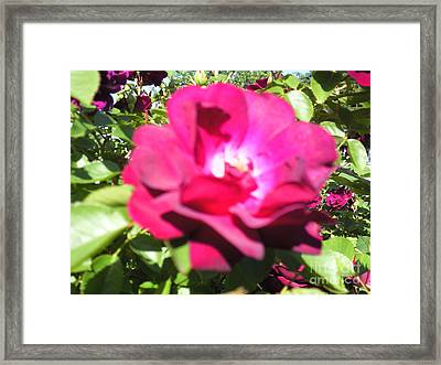 All About Roses And Green Leaves I Framed Print by Daniel Henning