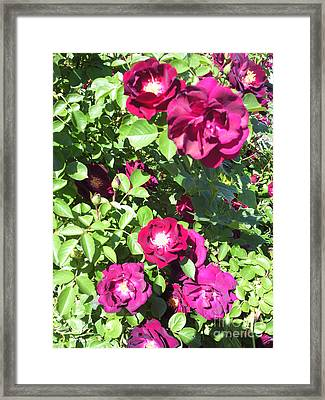 All About Roses And Green Leaves II Framed Print by Daniel Henning