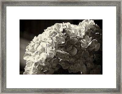 Framed Print featuring the photograph All Aflutter by Christi Kraft