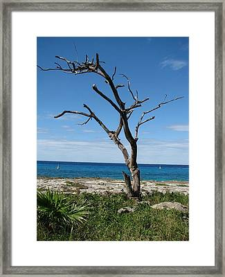 All Alone Framed Print by Alexis Lape