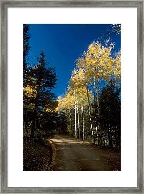 All Alone Garcia Park Framed Print by Lynard Stroud