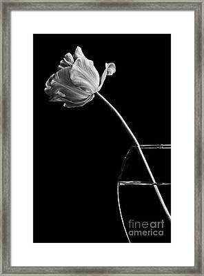 All Alone Framed Print by Marion Galt
