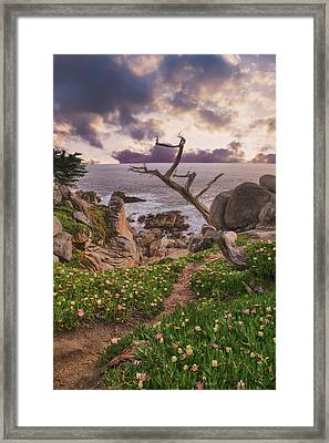 All Along Framed Print by Laurie Search
