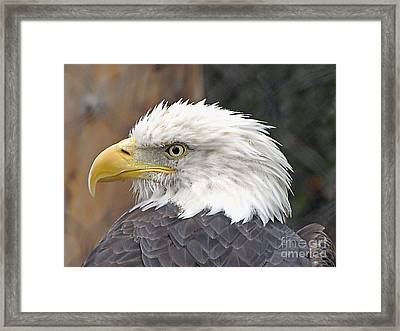 Framed Print featuring the photograph All American Bird by Martha Ayotte