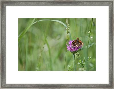 All By Myself Framed Print by Karol Livote