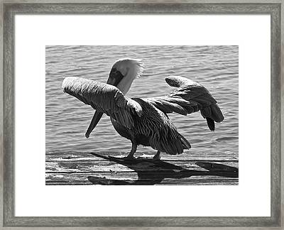 All Clear For Take Off Framed Print by Bonnes Eyes Fine Art Photography