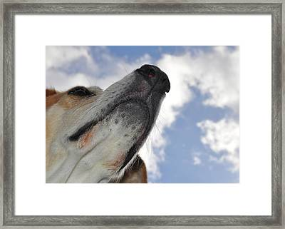 All Dogs Go To Heaven Framed Print by JAMART Photography