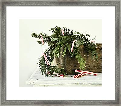 Framed Print featuring the photograph All Dressed Up by Kim Hojnacki