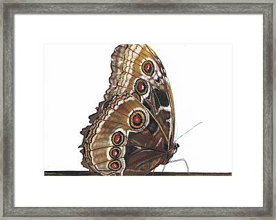 All Dressed Up Framed Print by Mattie O