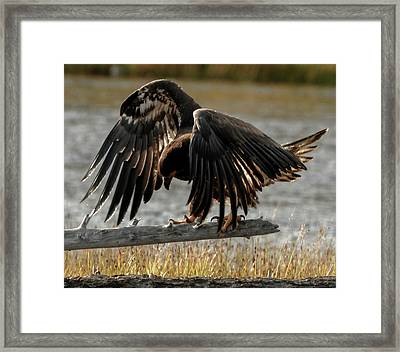 All Feathers Framed Print