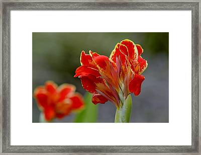 All Fired Up Framed Print by Melanie Moraga