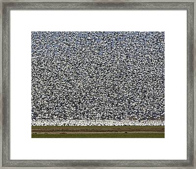 All Flocked Up Framed Print