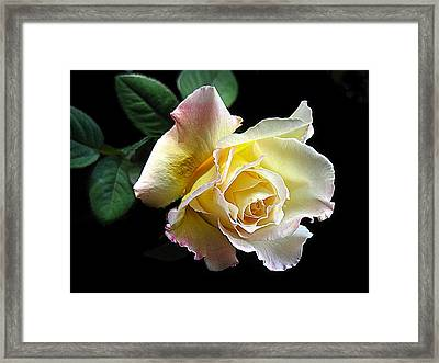All For You  No.1 Framed Print by Shirley Sirois