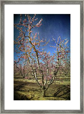 All Good Things Framed Print by Laurie Search