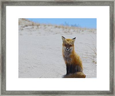 All Grown Up Framed Print by Amazing Jules