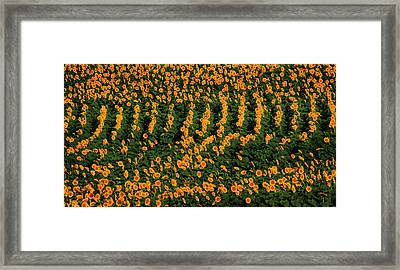 Framed Print featuring the photograph All In A Row by Chris Berry
