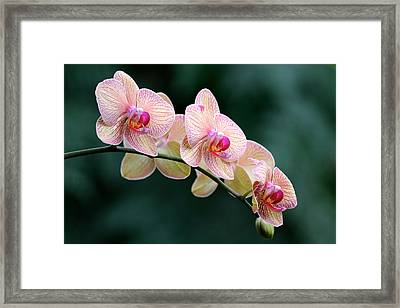 All In A Row Framed Print by Don Schroder