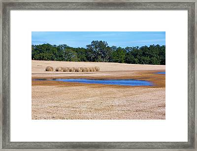 All In A Row Framed Print by Jan Amiss Photography