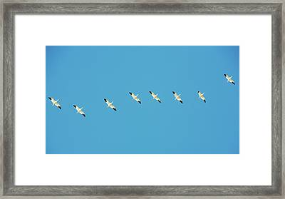 All In A Row Framed Print by Todd Klassy