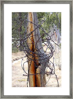 All In A Tangle Framed Print by Cynthia  Cox Cottam