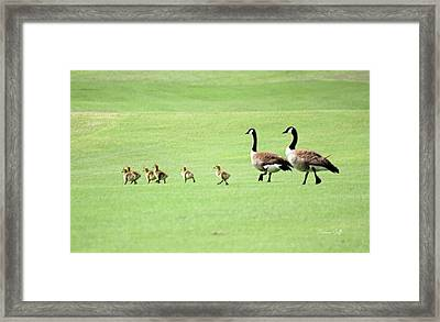 All In The Family Framed Print by Suzanne Gaff