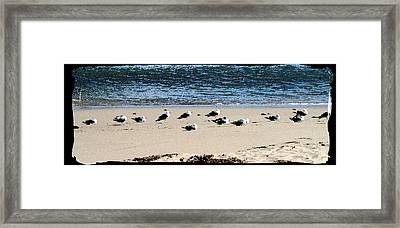 All My Gulls In A Row Framed Print by Ellen Lerner ODonnell