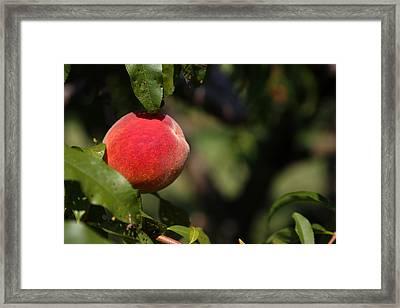 All Natural Peach Framed Print