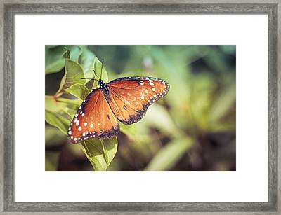 All On A Sunny Afternoon Framed Print