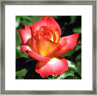 All Roses Aren't Red Framed Print by Kat Dee