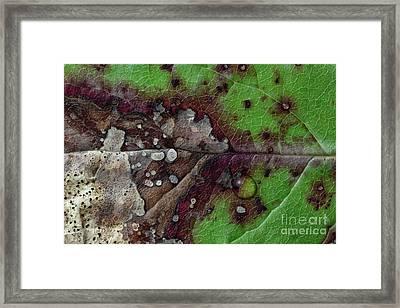 All Seasons In One Framed Print by Masako Metz
