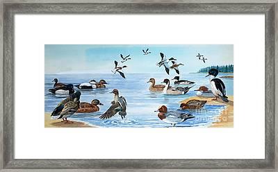 All Sorts Of Ducks Framed Print