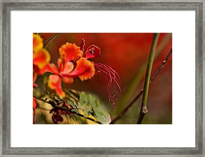 All That Way For This Framed Print by Thorne Owenly