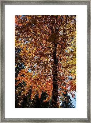 All The Colors 1 Framed Print by Claus Siebenhaar
