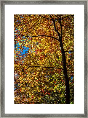 All The Colors 2 Framed Print by Claus Siebenhaar