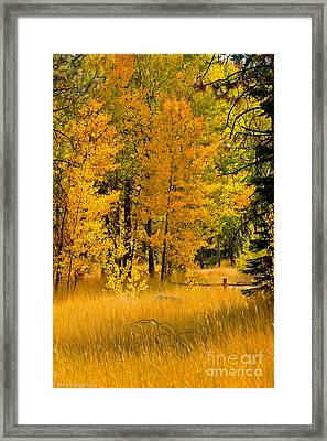 All The Soft Places To Fall Framed Print