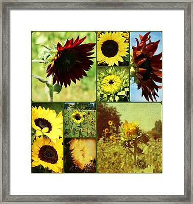 All The Sunflowers Framed Print
