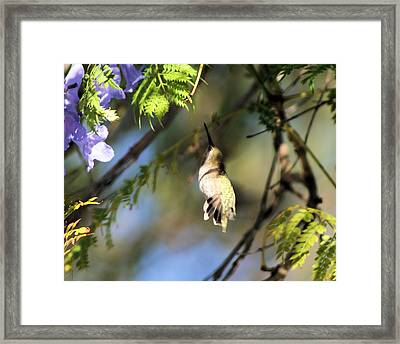 All The Way Up There Framed Print by Ellen Lerner ODonnell