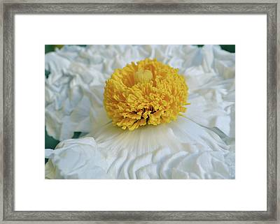 All Those Wrinkles Framed Print by Alessandra RC